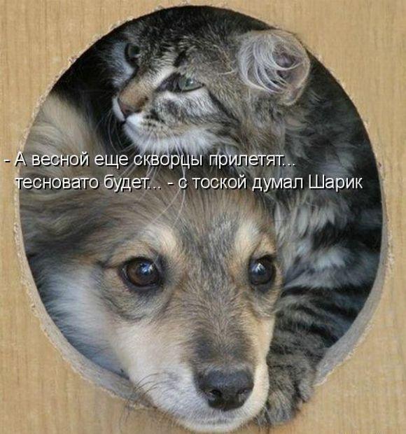 видео приколы про котов таньцюристив