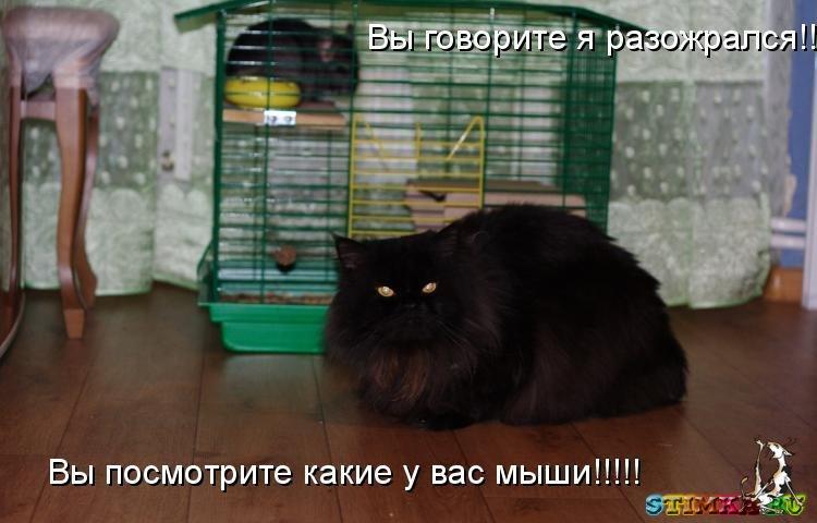 смешные картинки о животных и людях