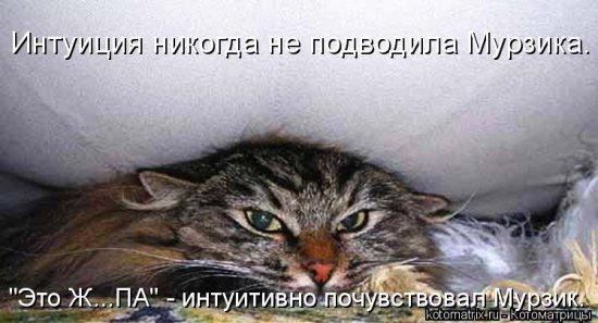 Прикольные картинки про животных