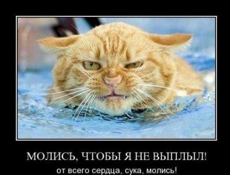 Демотиваторы про кошек