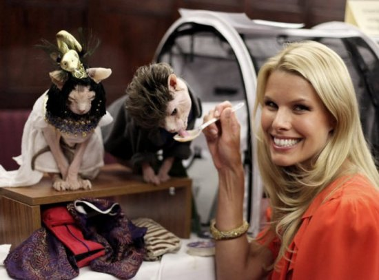 Выставка кошек на Algonquin Cat Fashion Show 2010