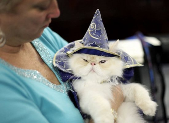 �������� ����� �� Algonquin Cat Fashion Show 2010