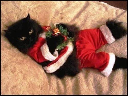 Поздравление с новым годом от котика фото 317