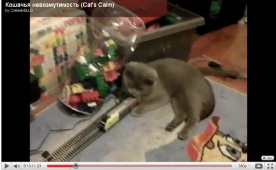 Кошачья невозмутимость