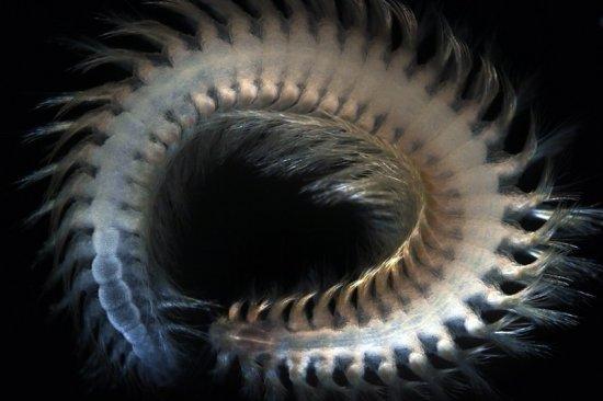 Кто живет на глубине океана?