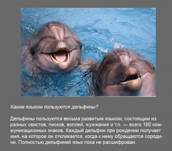 Stimka.ru_1291380119_fakt0080.jpg
