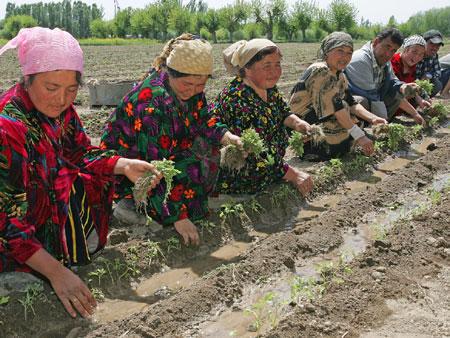 знакомство с иностранцами в таджикистане