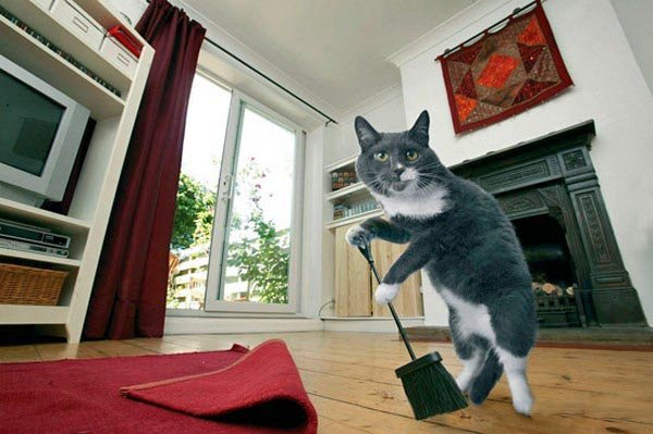 В домашних условиях фото наши кошки