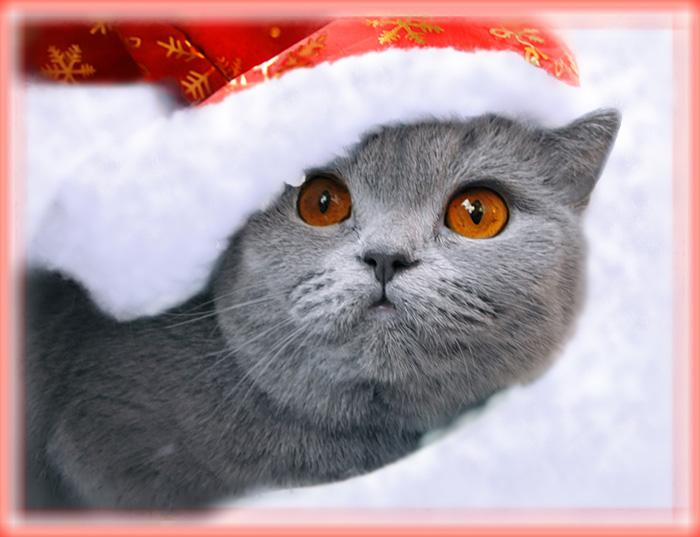 Поздравление с новым годом от котика фото 149