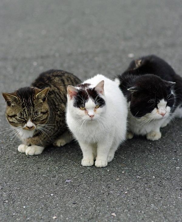 Остров кошек в японии новость остров