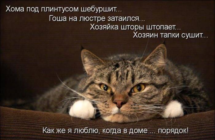 Стих про кота и хозяйку смешной