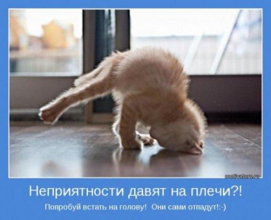 подборка от стасевича - Страница 2 Stimka.ru_1317035215_1316604839_1316519734_021