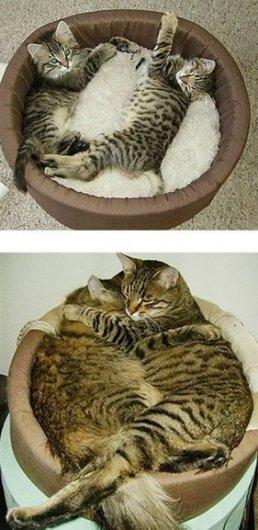 Кошачьи привычки