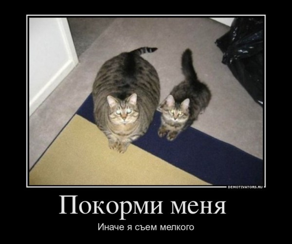 Stimka.ru_1326536209_1326386511_235562_pokormi-menya-.jpg