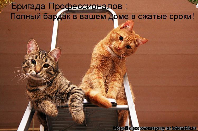 Картинки котов смешные для телефона