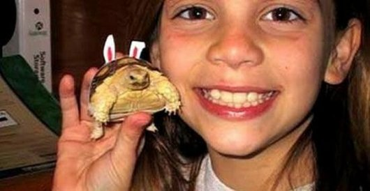 Девочка и черепаха