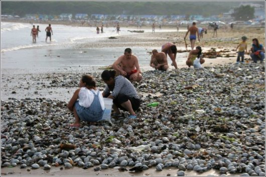 Деликатесы на пляже