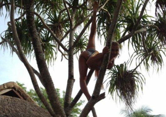Загадка дня. Кто на дереве?