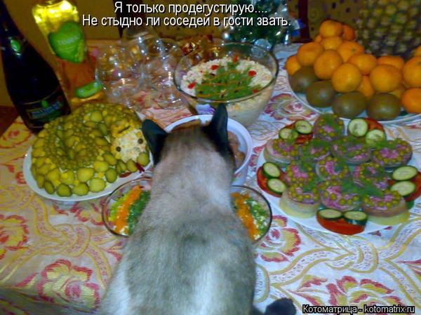murmansk-lesbi-chat-krug