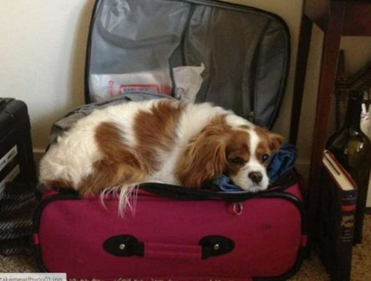 Животные, которых не берут с собой в поездку