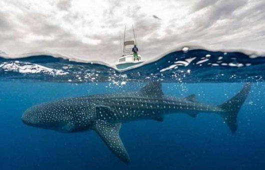 Удивительные фото природы от Леонардо ДиКаприо